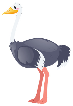 ostrich: Ostrich on white background illustration