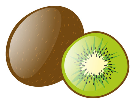 kiwi fruit: Fresh kiwi fruit on white background illustration