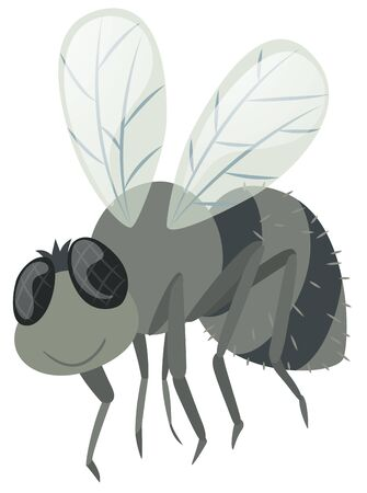 housefly: Housefly on white background illustration