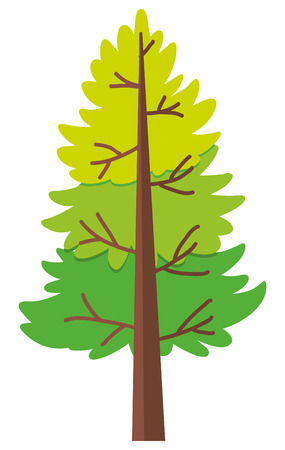 Pine tree on white background illustration