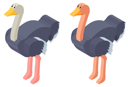ostrich: 3D design for ostrich birds illustration
