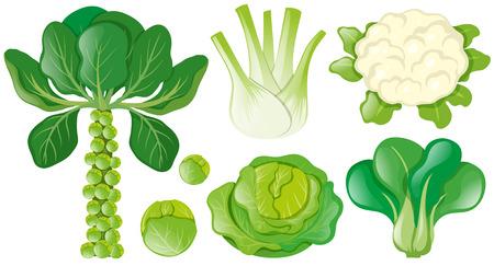 Different types of green vegetables illustration