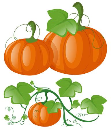 485 pumpkin vine stock illustrations cliparts and royalty free rh 123rf com Scary Pumpkin Clip Art Pumpkin Clip Art Clip Art