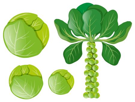 Groene kool en spruitjes illustratie