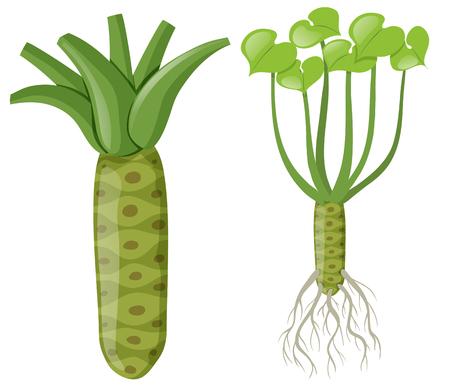 Wasabi plant with roots and leaves illustration Ilustração Vetorial