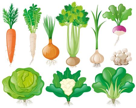 grocer: Different types of vegetables illustration Illustration