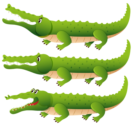 Crocodile in three different actions illustration