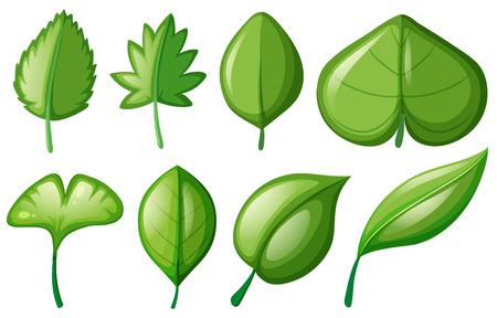 Different shapes of leaves illustration Illustration