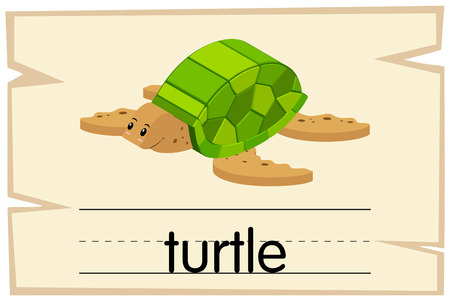 Flashcard for word turtle illustration Illustration