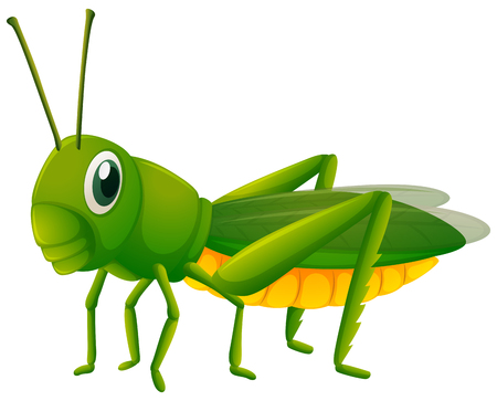 Cricket on white background illustration