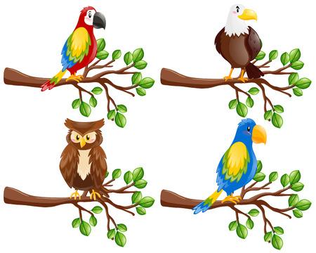 Different kinds of birds on the branch illustration Illustration