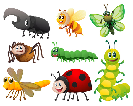 Different kinds of small insects illustration