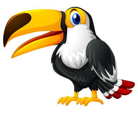 Tukanvogel auf weißer Hintergrundillustration Standard-Bild - 78948447