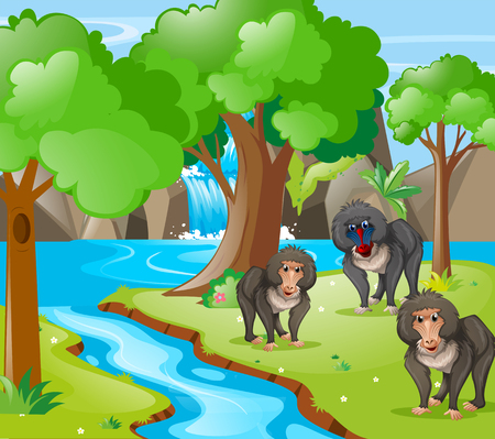 Baboon monkeys in the woods illustration Illustration
