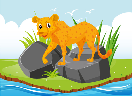 Cheetah tiger on the rock illustration Illustration