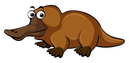 platypus: Platypus on white background illustration