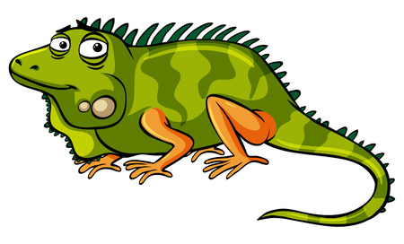 Green iguana on white background illustration