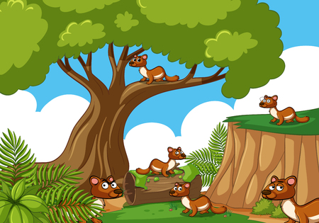 Many squirrels in the forest illustration