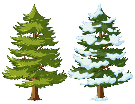Pine tree with and without snow illustration