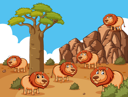 Lions living in the desert field illustration