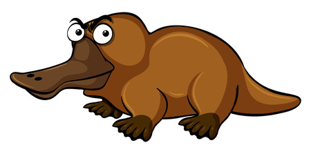 Platypus with serious face illustration Illustration