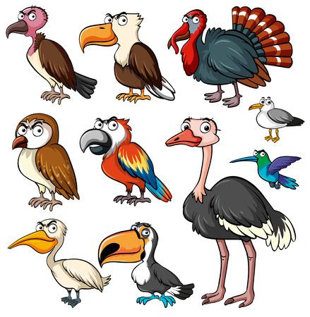 Different kinds of wild birds illustration
