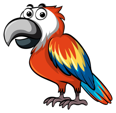 macaw: Red parrot on white background illustration