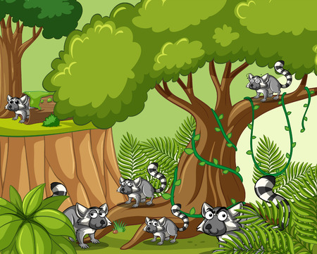 raccoons: Scene with lemurs in forest illustration