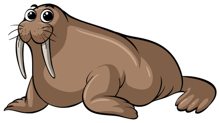 Walrus with happy face on white background illustration