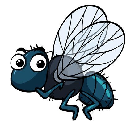 Housefly on white background illustration