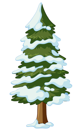 Pine tree covered with snow illustration