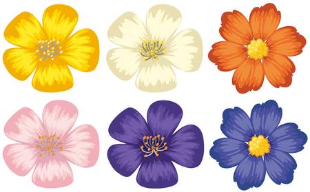 Colorful flowers on isolated white background illustration