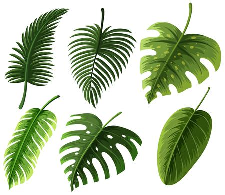 Different kinds of leaves illustration. Çizim