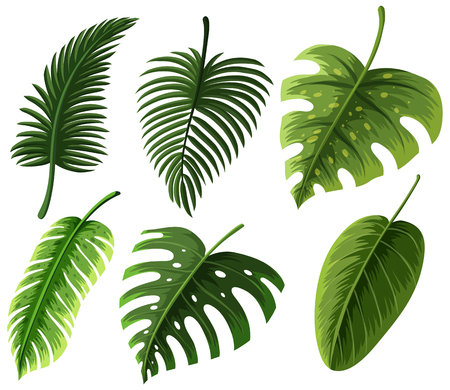 six objects: Different kinds of leaves illustration. Illustration