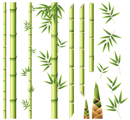 Bamboo stems and leaves illustration Stock Vector - 87052590