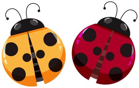 ladybug: Yellow and red ladybugs on white background illustration