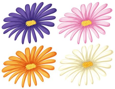 quatre couleurs de fleurs sur fond blanc illustration