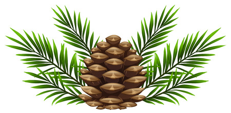 Pinecone with pine leaves on white background illustration Ilustracja