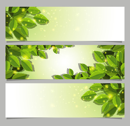 Banner templates with green leaves illustration  イラスト・ベクター素材