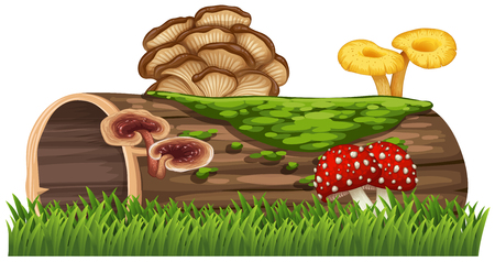 Log with mushrooms growing on it illustration