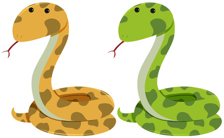 Two rattlesnakes on white background illustration