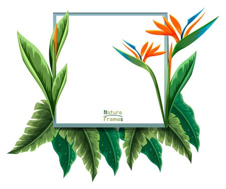 Frame template with bird of paradise plant illustration Illustration