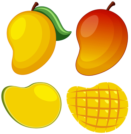 Fresh mango on white background illustration