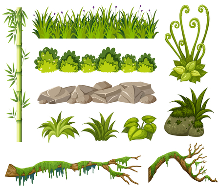 Bamboo and other plants on white background illustration