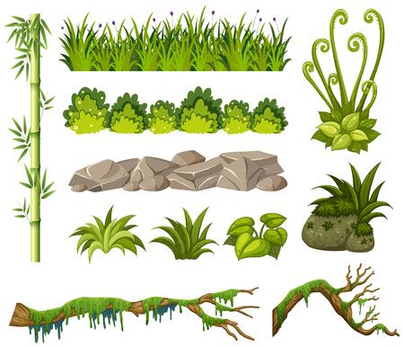 Bambus und andere Pflanzen auf weißem Hintergrund Illustration