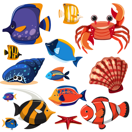 A Set of Sea Creatures illustration