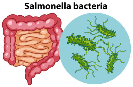 Magnified cells of Salmonella bacteria illustration Illustration
