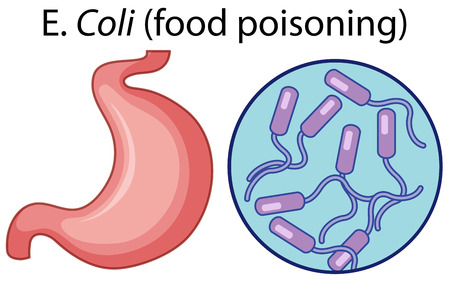 Magnified cells of food poisoning illustration