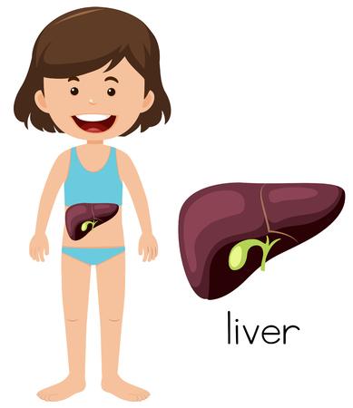 A Cartoon of a Girl Liver illustration