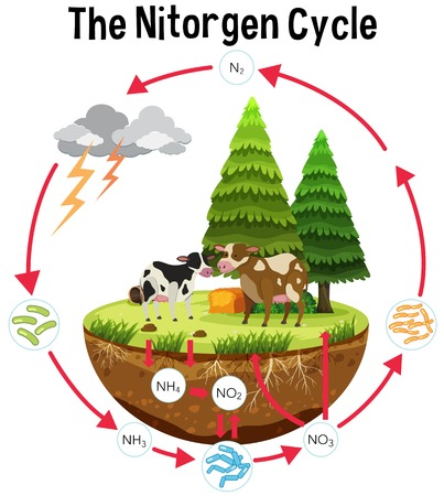 A Science Poster of Nitrogen Cycle illustration Vectores